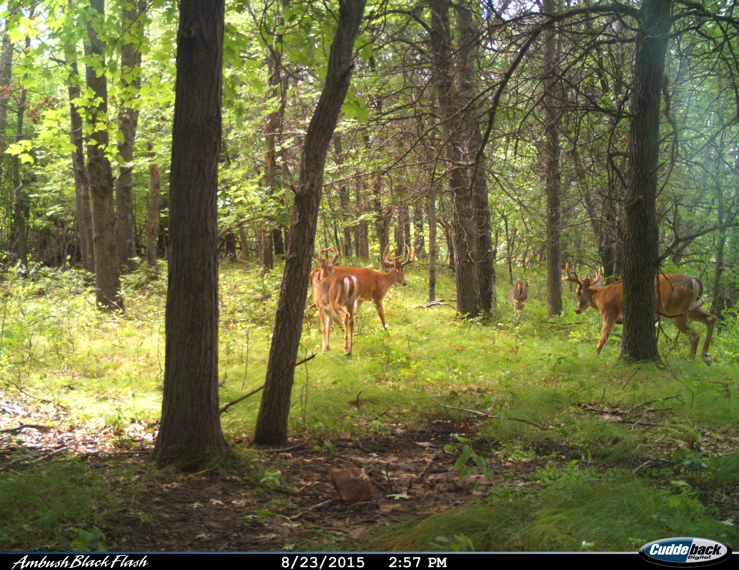Photographer - Trail Cam by Jim Krueger - 2015 - available under Creative Commons license CC BY-SA 4.0