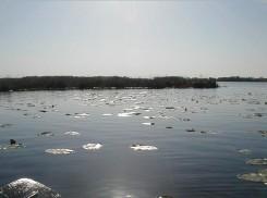 Lily pads and sunshine on Fish Lake