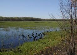 Vernal pool in Sandhill Crane Marsh