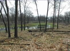 Temporary Ponds in Burn Units