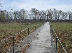 Bikers Bridge Marsh is a tussocky Sedge Fen dominated by Carex stricta and Calamagrostis inexpansa. It grades into Mixed Shrub and Minerotrophic Tamarack Swamp