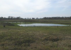Vernal pool in early May