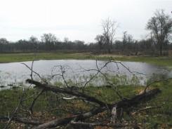 South Circle Marsh (SEB)