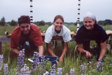 Summer interns weeding in a BioCON ring.