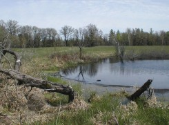 Beaver Impoundment by Cedar Bog Lake
