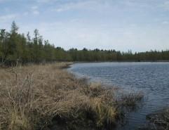 Cedar Bog Lake in early May