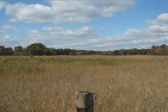 RSE periodically burned and having a Salix gracilis wetland