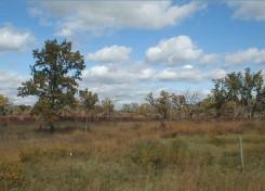 Scrub Oak Woodland (SWB)