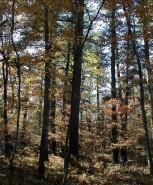 Big Buck Ridge