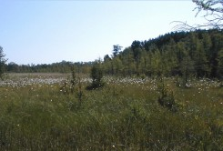 Beckman Lake mat
