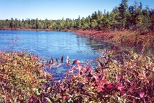 Cedar Bog Lake with Decodon in the foreground