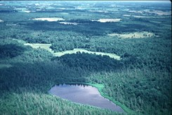 Aerial View of Cedar Bog Lake and environs (1978)