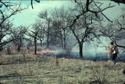 A spring burn in Allison Savanna