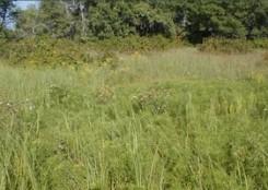 Helen Allison Savanna marshy area