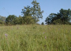 Helen Allison Savanna grasses and forbs
