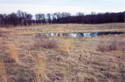 Vernal pool in very early spring