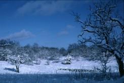Winter scene at Helen Allison Savanna