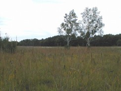 Birch Prairie (Field 525, abandoned 1951) and now included in a Burn Unit. Bye bye birches.