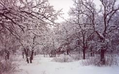 Savanna in winter snow