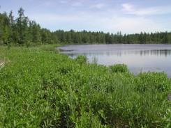Cedar Bog Lake in summer July greenery