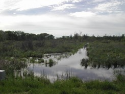 Mixed Shrub Swamp surrounds drainage ditch NE of the Lab
