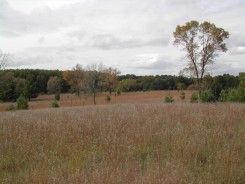 CNW (Field 35; abandoned 1943) now dominated by Schizachyrium and slowly being invaded by woodies