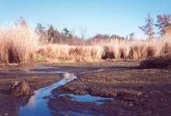 Mudflats exposed during low water in the fall