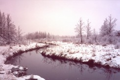 Even in winter the creek opens up during periods of mild weather
