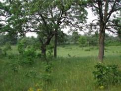 Helen Allison Savanna vegetation
