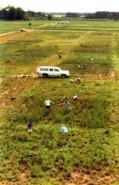 Summer Interns in the Big Biodiversity Experiment (E120)