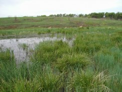 Graminoids ring a small wet swale