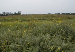 Prairie vegetation in late summer