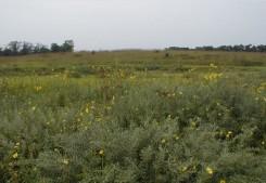 Prairie vegetation in late summer
