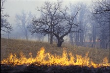 Prescribed burn in a savanna
