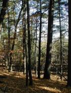 White Pine Ridge