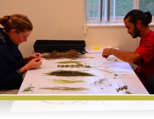 Interns sorting plant biomass.