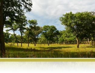 Classic oak savanna, photo by Jake Miller