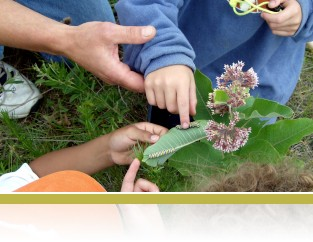 Monarch explorations with 3rd graders