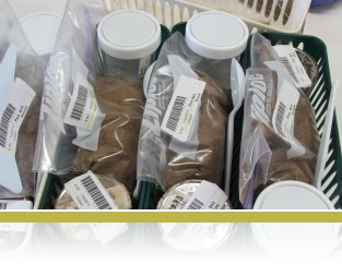 Bar-coded samples ready to be wieghed.