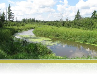 A view of Cedar Creek in summer.