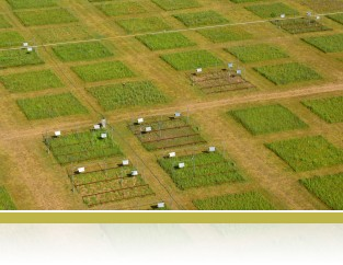 Aerial view of the Big Biodiversity experiment field plots.