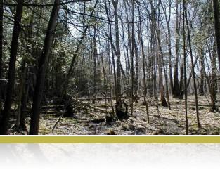 Lowland hardwood forest.