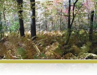 Mixed hardwood forest.