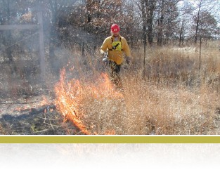 Lighting a prescribed burn.