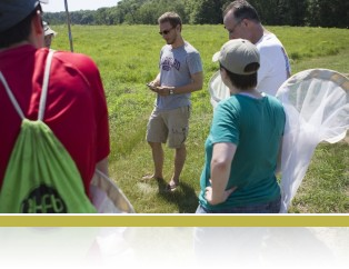 Teacher workshop, sweep-netting insects