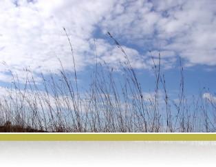 Prairie grasses against a blue sky.