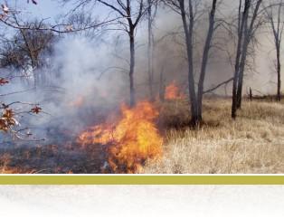 Oak savanna prescribed fire