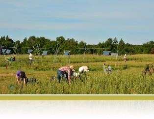 Weeding in Big Biodiversity experiment