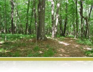Mesic upland forest.